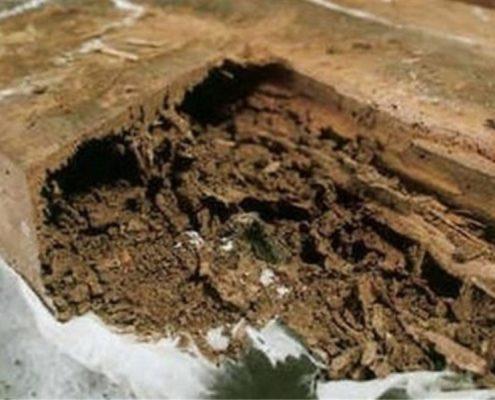 eliminamos hongos de pudrición madera