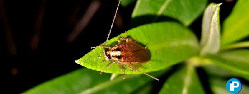 prevenir las plagas de cucarachas 2