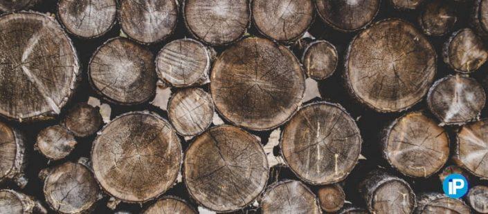 Cómo afectan los hongos de pudrición a la madera