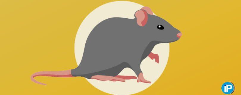 Consejos para erradicar y eliminar ratones