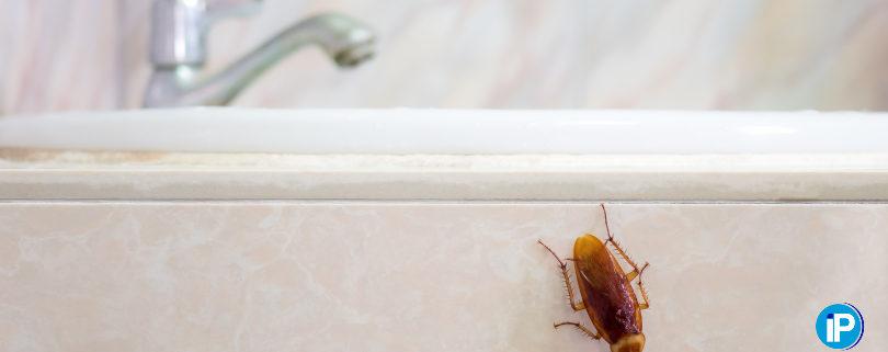 ¿Por donde se cuelan las cucarachas en el cuarto de baño
