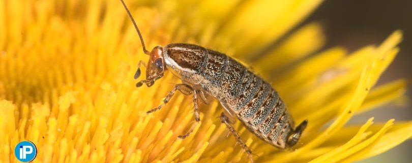 Las plagas mas comunes en primavera