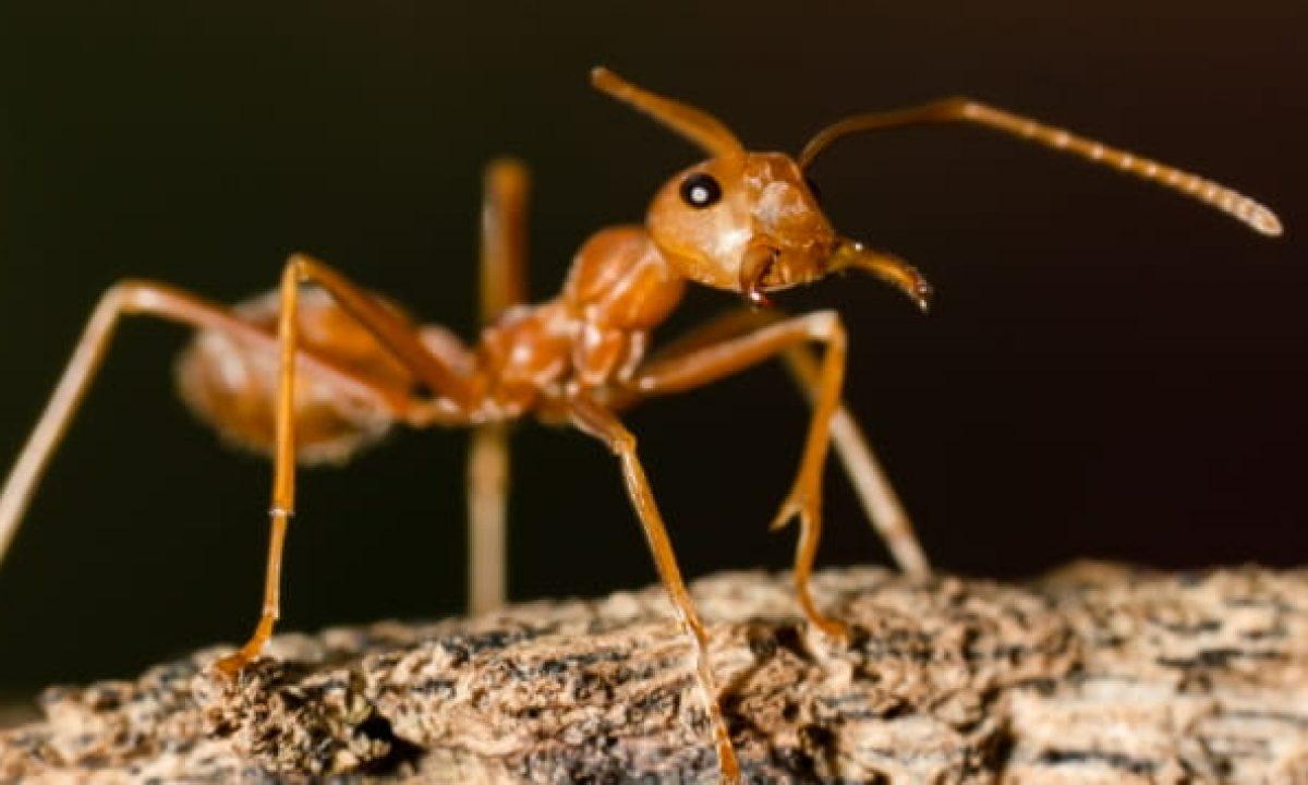 MTFZD Nido Hormigas Conveniente C/ómodo Hormiguero Acrilico Caja Nido AntHouse Carcasa Hormiga Transparente Accesorios Colocar Jaula Casa Mascota para Hormigas Vivas Color : A