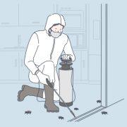 fumigación de cucarachas en tu negocio