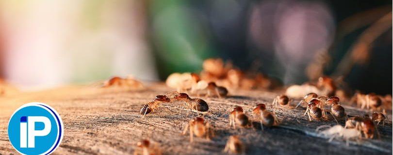 Portada tratamiento de termitas